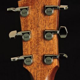 Taylor Demo-314 Back Headstock Close